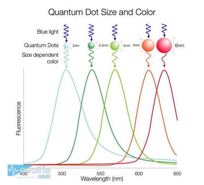 趨勢還是過渡?量子點螢幕真的比OLED還要好? - 壹讀