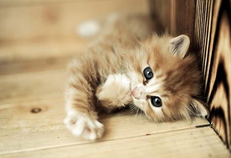 小貓打噴嚏怎麼辦 4種情況易導致打噴嚏 - 壹讀