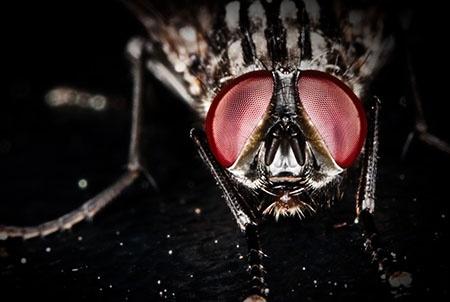 蒼蠅一生可以繁殖2萬隻後代,蚊子的口器,它能活多久? - 壹讀