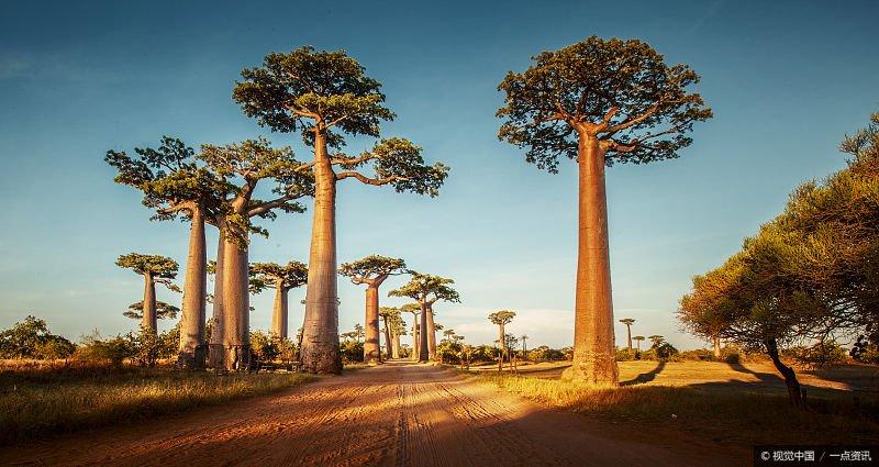 馬達加斯加:非洲唯一的黃種人國家。90%的動植物島上所獨有 - 壹讀