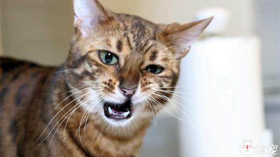 「哈秋哈秋」貓咪怎麼打噴嚏了! - 壹讀