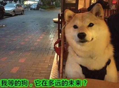 單身狗是什麼意思? 單身狗是怎麼來的? - 壹讀