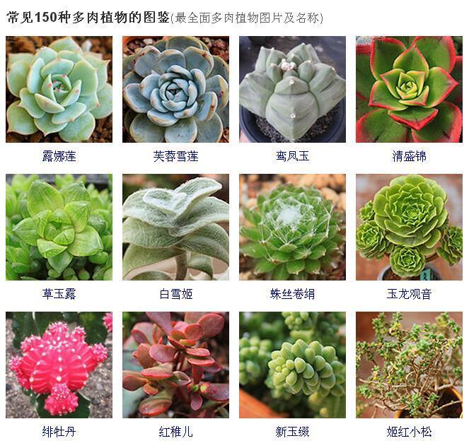 常見150種多肉植物的圖鑑 最全面多肉植物圖片及名稱 - 壹讀