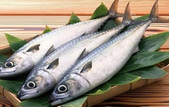 馬鮫魚是什麼魚 好吃嗎? - 壹讀