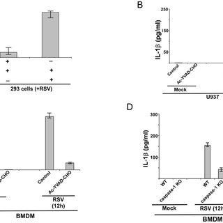 (PDF) TLR2/MyD88/NF-κB Pathway, Reactive Oxygen Species
