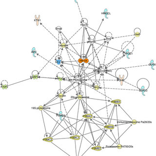 Biological networks derived using IPA network analysis