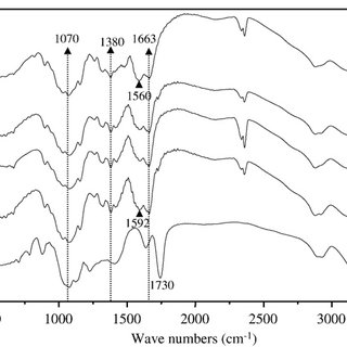 Measurement of absorbance spectrum of α-amylase in