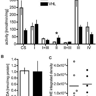 Lactate dehydrogenase expression. A Expression of LDHA and