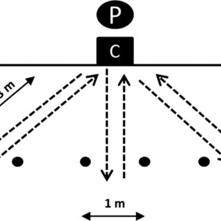 Schematic setting for a tennis-specific endurance field