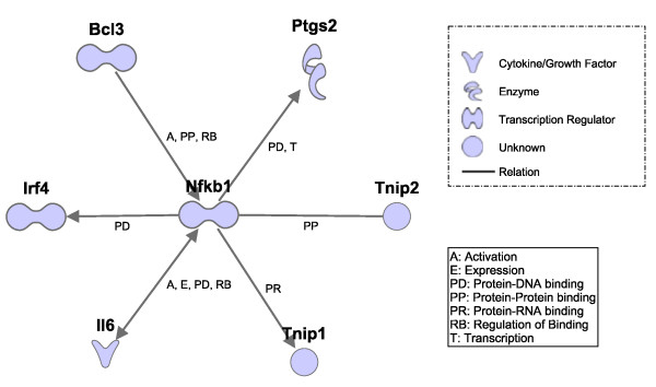 Interactions between Nfkb1 and DE genes found only by