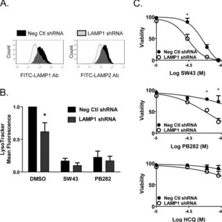 Sigma-2 receptor ligands localize to lysosomes and induce