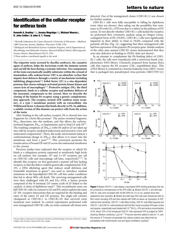 medium resolution of  pdf war against anthrax