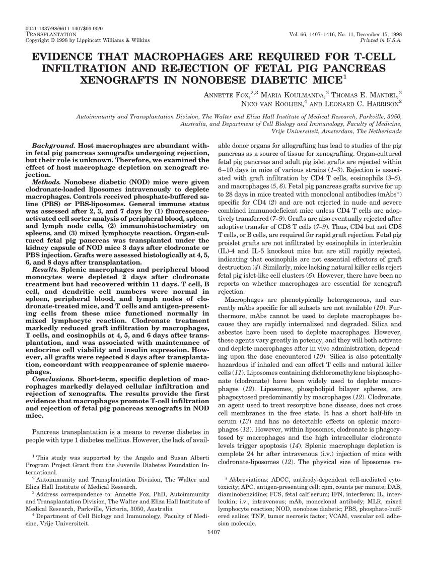 medium resolution of comparison of fetal pig pancreas grafts 4 days after transplantation download scientific diagram