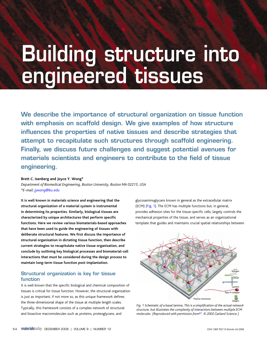 hight resolution of  pdf building structure into engineered tissues