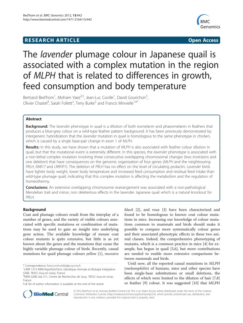 medium resolution of japanese quail homozygous for the silver mutation b white quail download scientific diagram