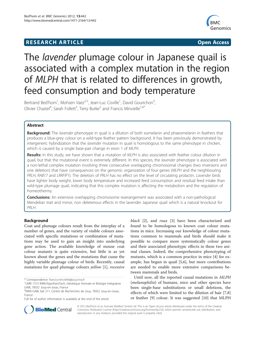 hight resolution of japanese quail homozygous for the silver mutation b white quail download scientific diagram
