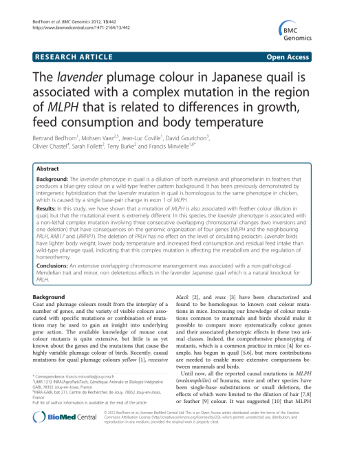 small resolution of japanese quail homozygous for the silver mutation b white quail download scientific diagram