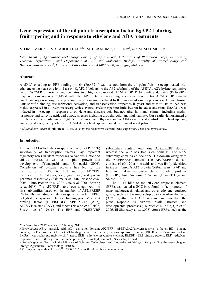 medium resolution of subcellular localization of egap2 1 protein in onion epidermis cells download scientific diagram