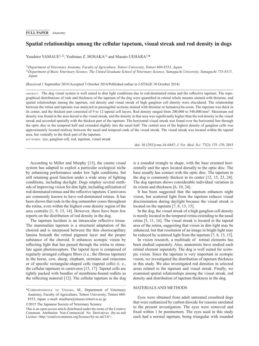 medium resolution of comparison between rod and cone inner segment size density and ratio download scientific diagram