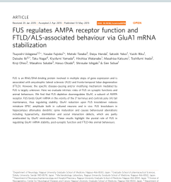 pdf fus regulates ampa receptor function and ftld als associated behaviour via glua1 mrna stabilization [ 850 x 1118 Pixel ]