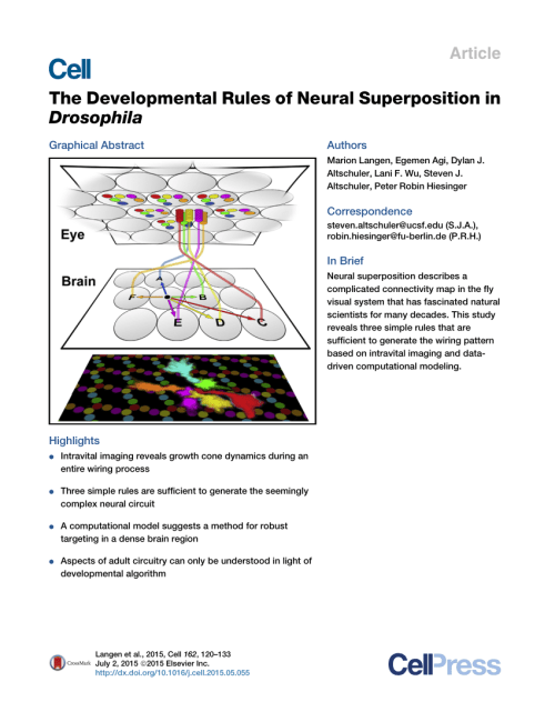 small resolution of the stop rule part 2 r1 r6 growth cone front overlaps can increase download scientific diagram