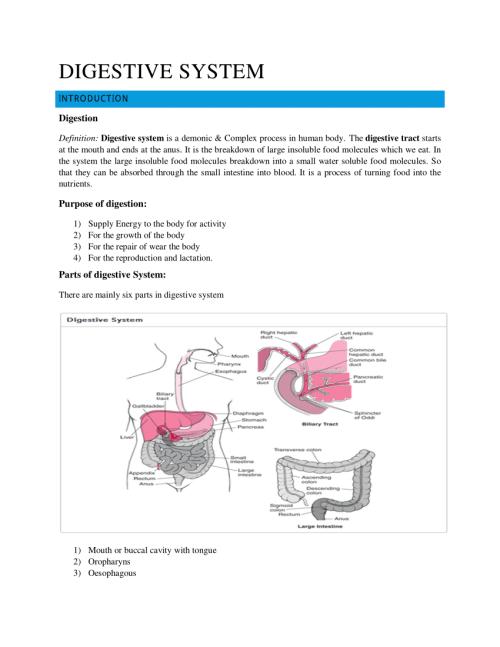 small resolution of PDF) DIGESTIVE SYSTEM   Mahti Ahsan