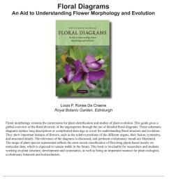 arum floral diagram [ 850 x 1085 Pixel ]