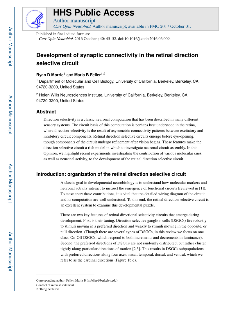 hight resolution of  pdf development of synaptic connectivity in the retinal direction selective circuit