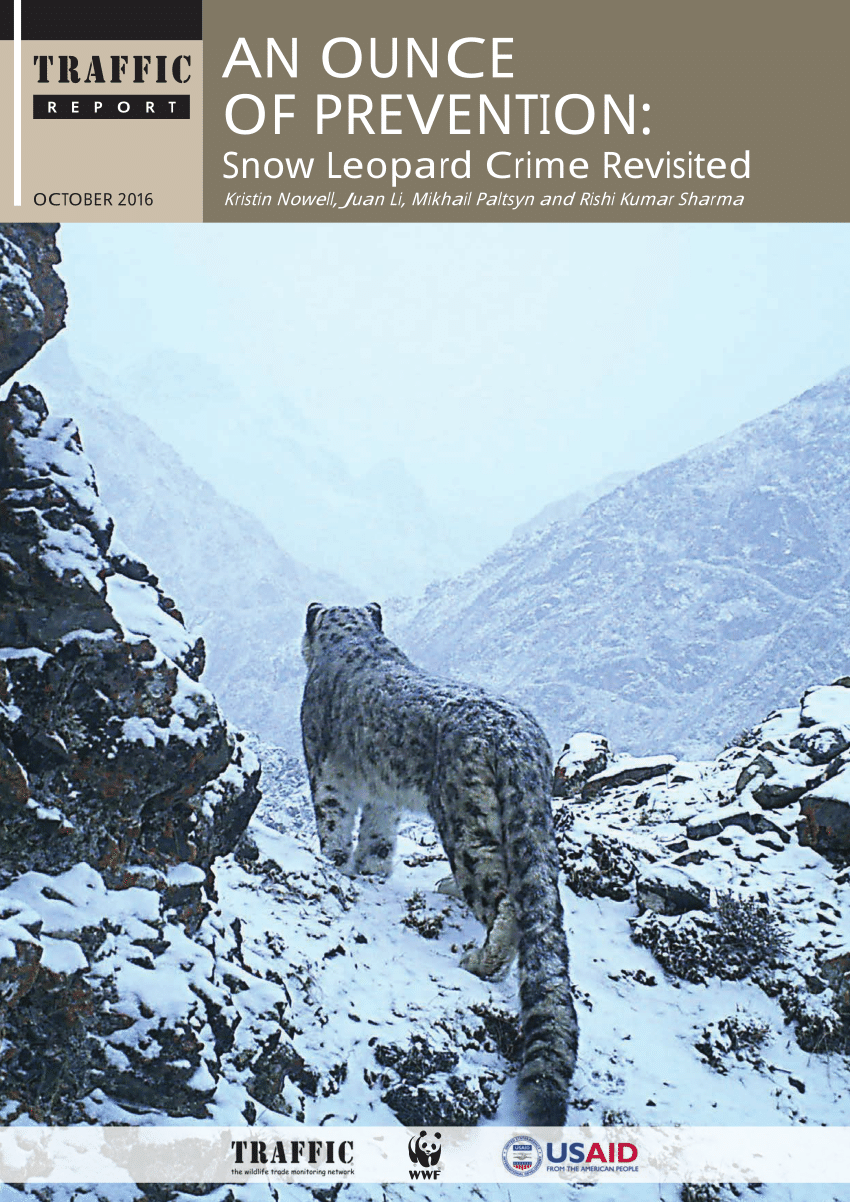 hight resolution of  pdf what is a snow leopard taxonomy morphology and phylogeny