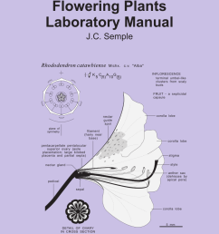 pdf flowering plants laboratory manual [ 850 x 1100 Pixel ]