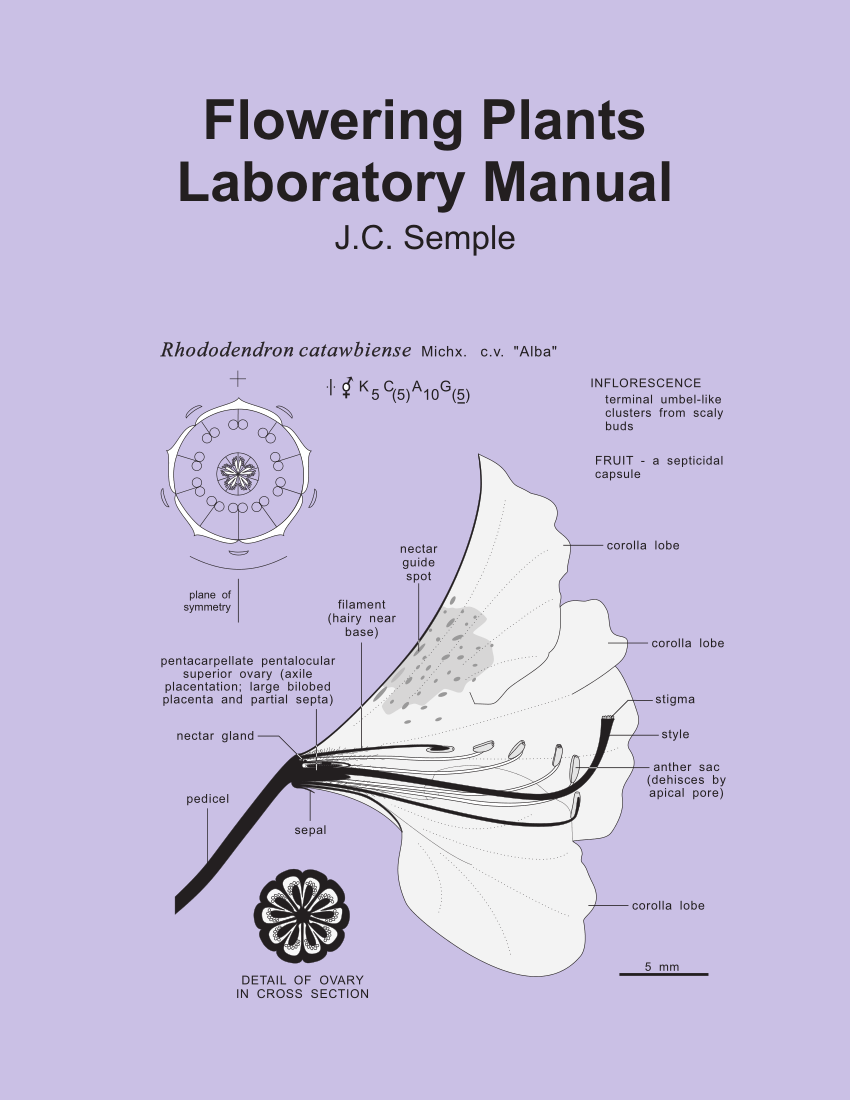 medium resolution of  pdf flowering plants laboratory manual