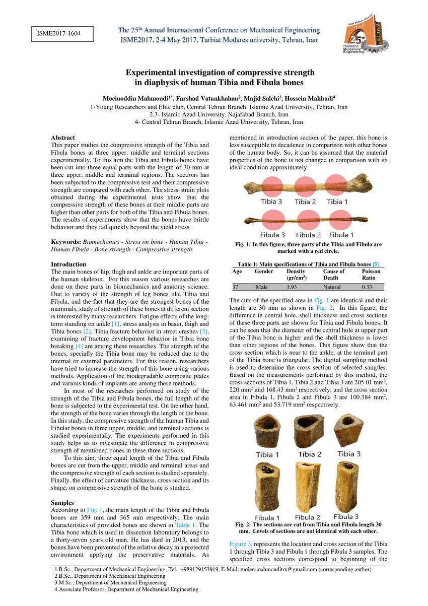 medium resolution of  pdf experimental investigation of compressive strength in diaphysis of human tibia and fibula bones