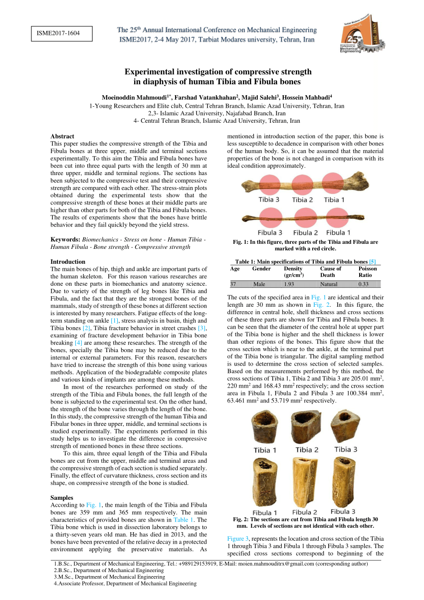 hight resolution of  pdf experimental investigation of compressive strength in diaphysis of human tibia and fibula bones