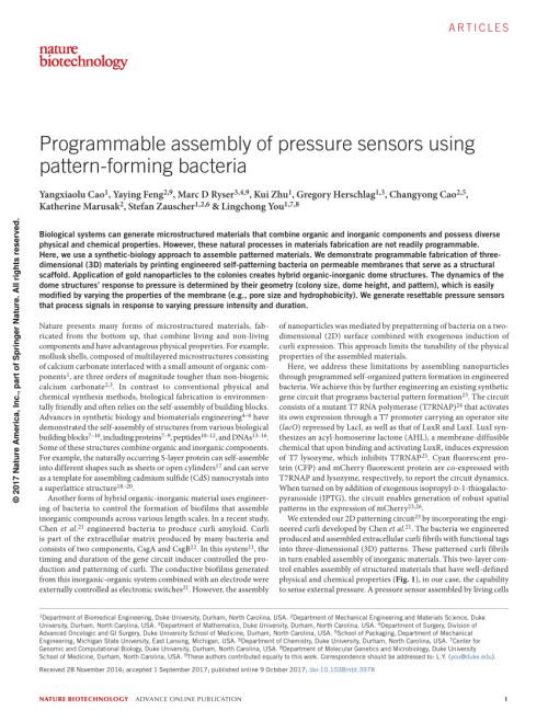 small resolution of  pdf programmable assembly of pressure sensors using pattern forming bacteria