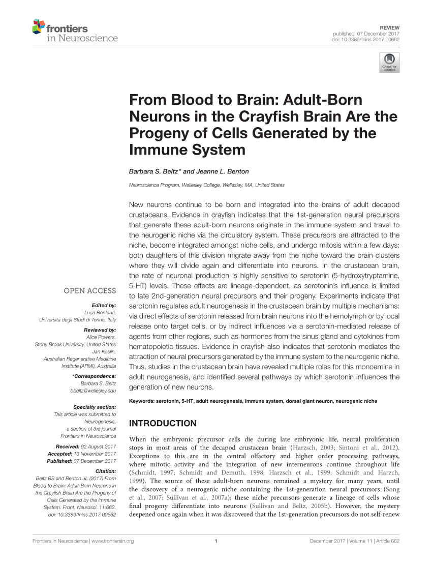 medium resolution of the neurogenic system in the adult crayfish brain a diagram of the download scientific diagram