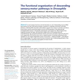 cx structures and neuron classification in previous studies morphology download scientific diagram [ 850 x 1100 Pixel ]