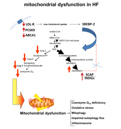 pdf intracellular cholesterol accumulation and coenzyme q10 deficiency in familial hypercholesterolemia [ 850 x 1203 Pixel ]