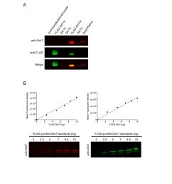 pdf electroretinogram analysis of the visual response in zebrafish larvae [ 850 x 1100 Pixel ]