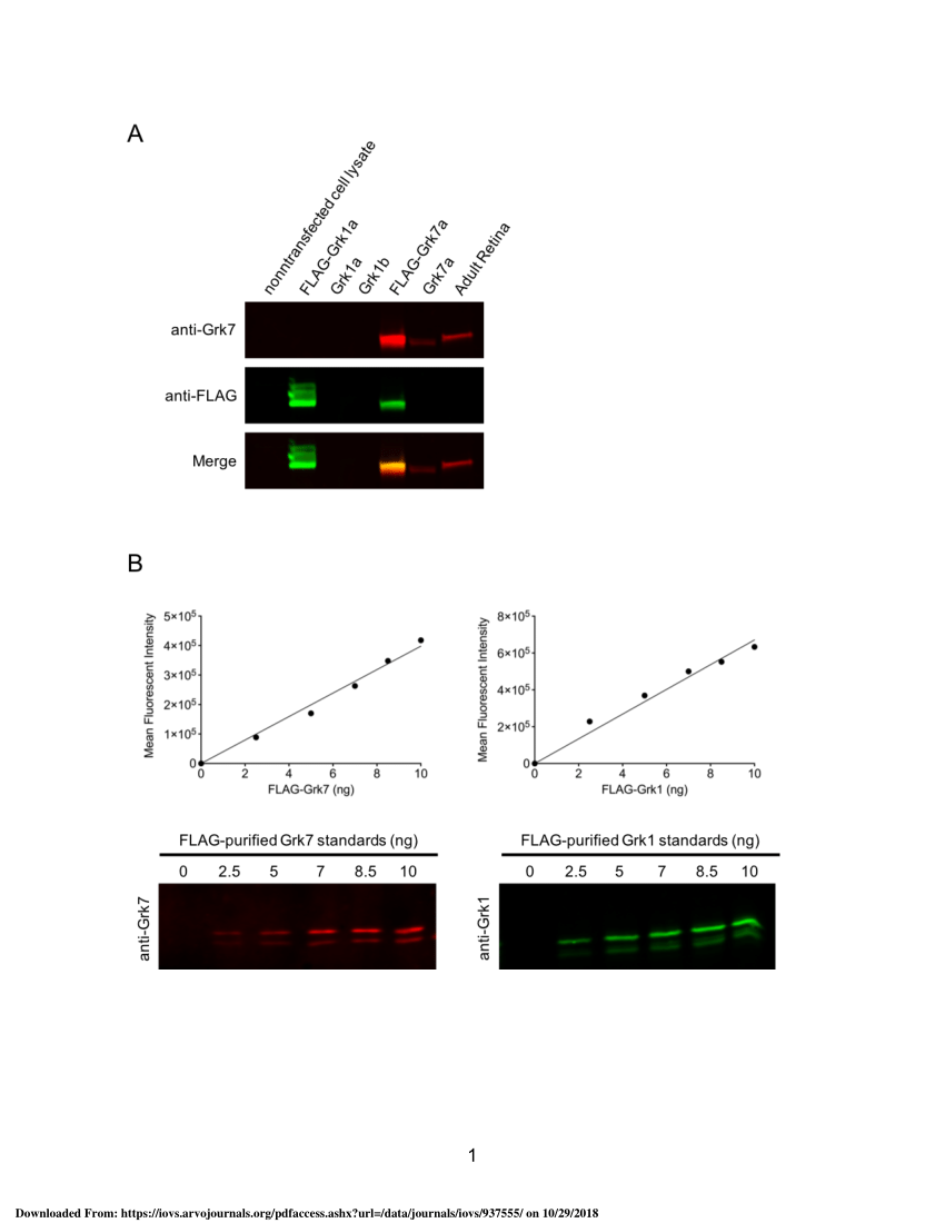hight resolution of  pdf electroretinogram analysis of the visual response in zebrafish larvae