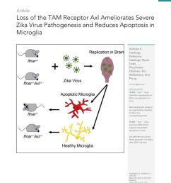 pdf prostaglandin e 2 induces oncostatin m expression in human chronic wound macrophages through axl receptor tyrosine kinase pathway [ 850 x 1105 Pixel ]