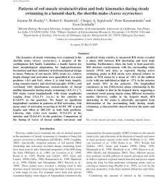 pdf patterns of red muscle strain activation and body kinematics during steady swimming in a lamnid shark the shortfin mako isurus oxyrinchus  [ 850 x 1100 Pixel ]