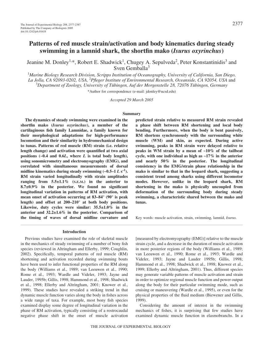 medium resolution of  pdf patterns of red muscle strain activation and body kinematics during steady swimming in a lamnid shark the shortfin mako isurus oxyrinchus