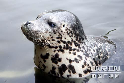 大連斑海豹國家級自然保護區管理局成立_新聞中心_新浪網