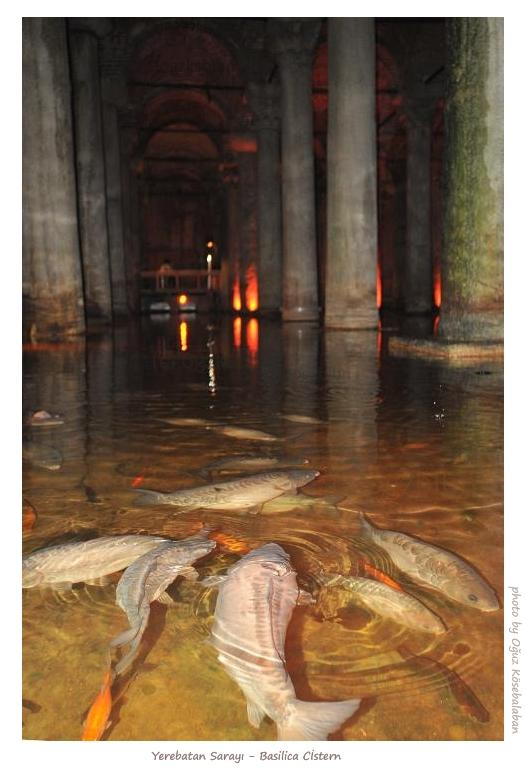Basilica Cistern Carps a photo from Istanbul Marmara  TrekEarth