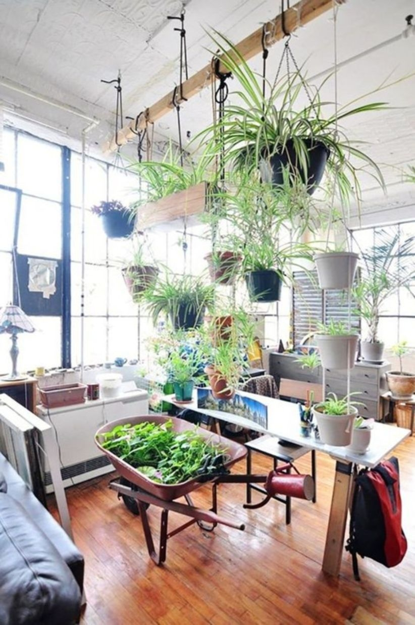 Inspiring Indoor Plant Display And Decoration Ideas