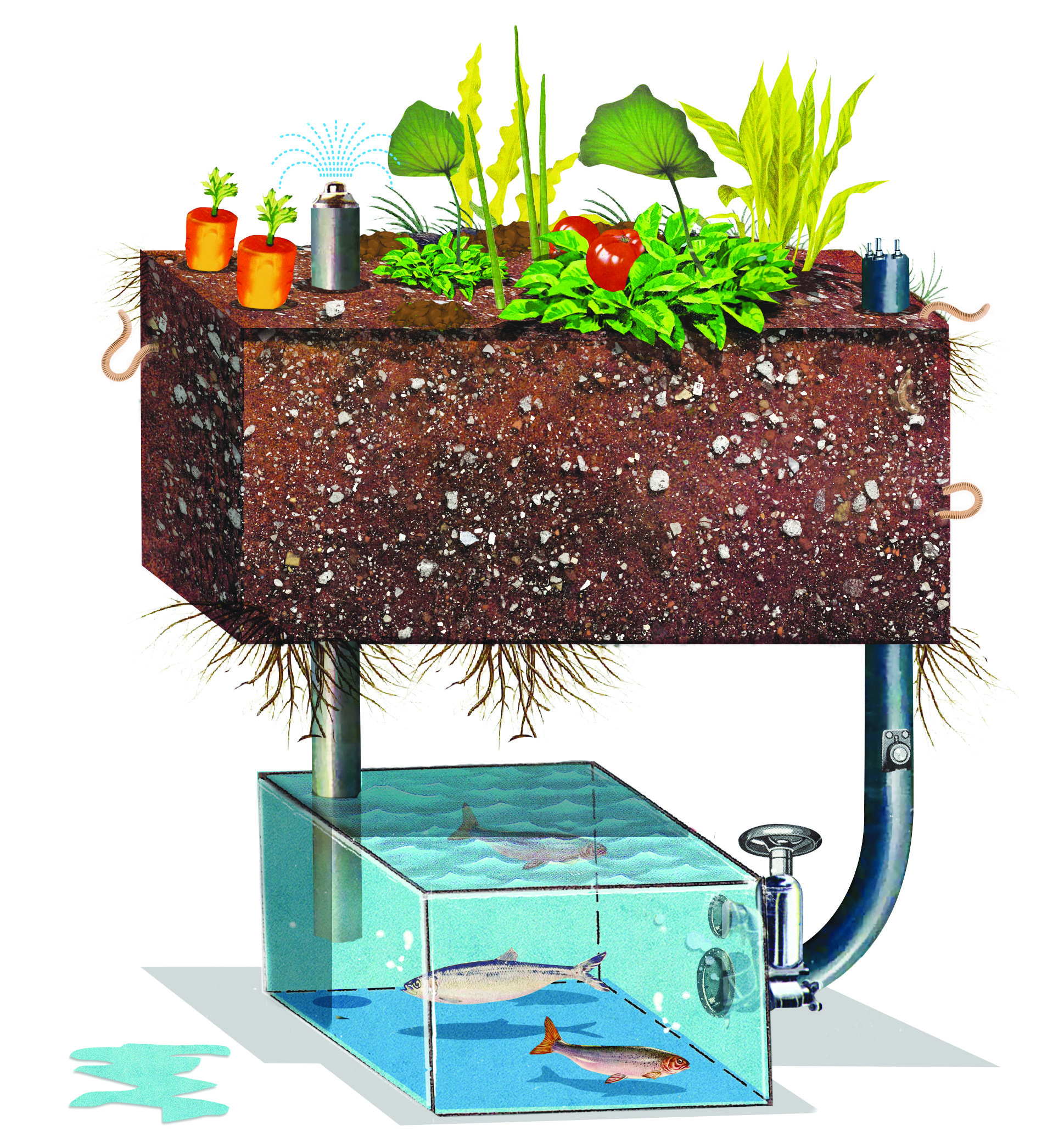 hight resolution of schematic diagram of aquaponic