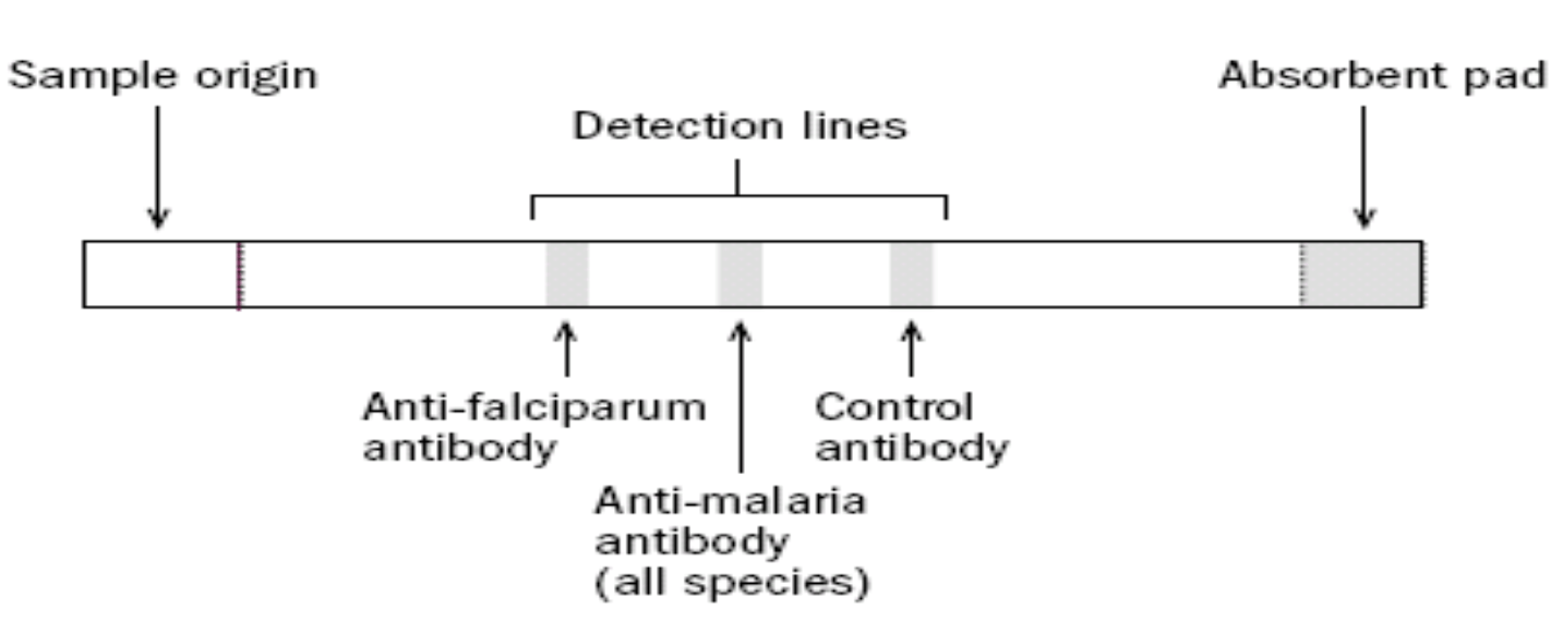 hight resolution of malaria lab diagnosis
