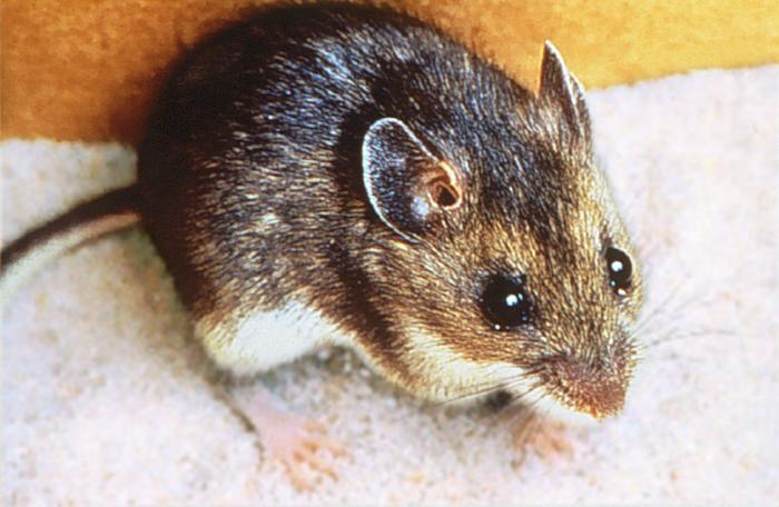 A new case of Hantavirus suspected in King County – PUBLIC HEALTH ...
