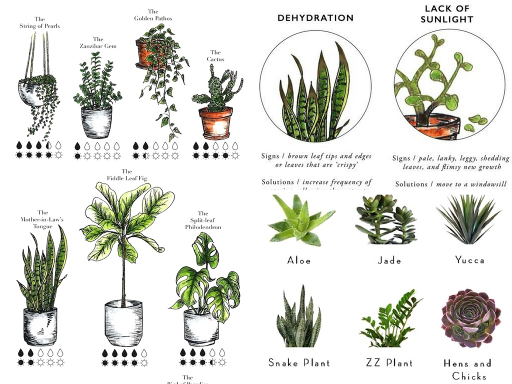 9 Essential Indoor Plant Resources To Finally Keep Them