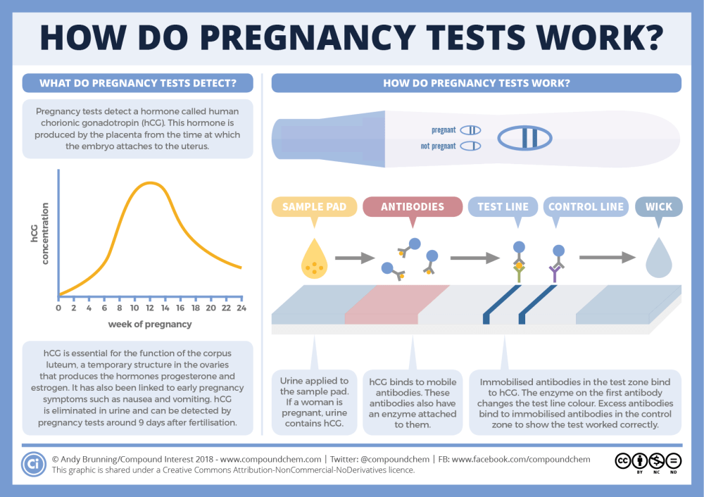 medium resolution of how do pregnancy tests work